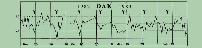 oscillogram of oak tree buds