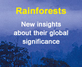 link to rainforest research news item
