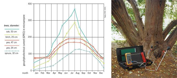 Left: graph of bio-electrical currents in various tree species, annual variations. Right: photo of Rajda's measuring device