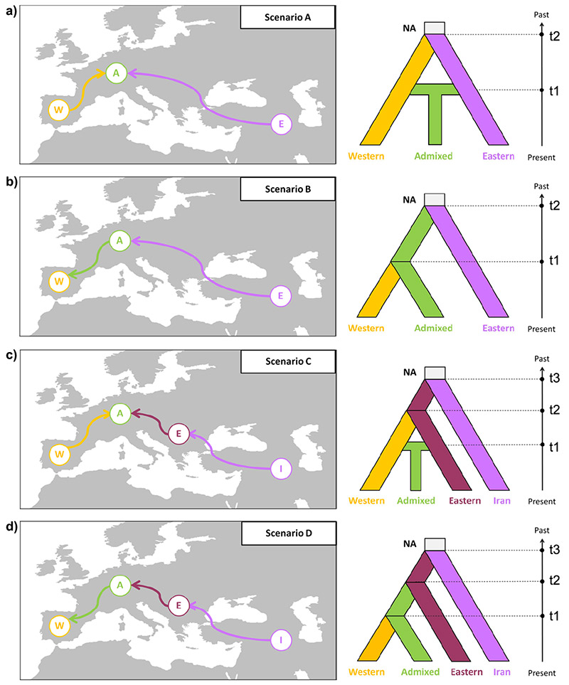 Fig. 1 The demographic scenarios used for Taxus baccata in the ABC analyses.