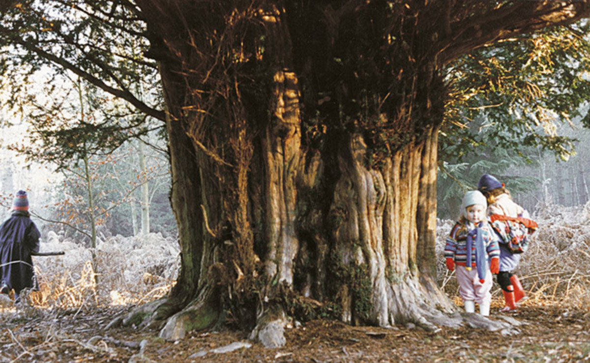 Three small children walk around an ancient yew tree. © Toby Hindson