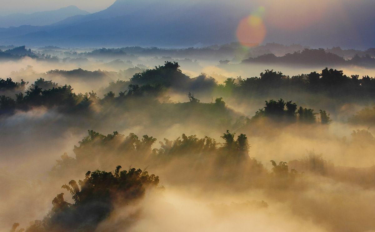 Heavy evaporation over dense forest. © aslysun/shutterstock.com