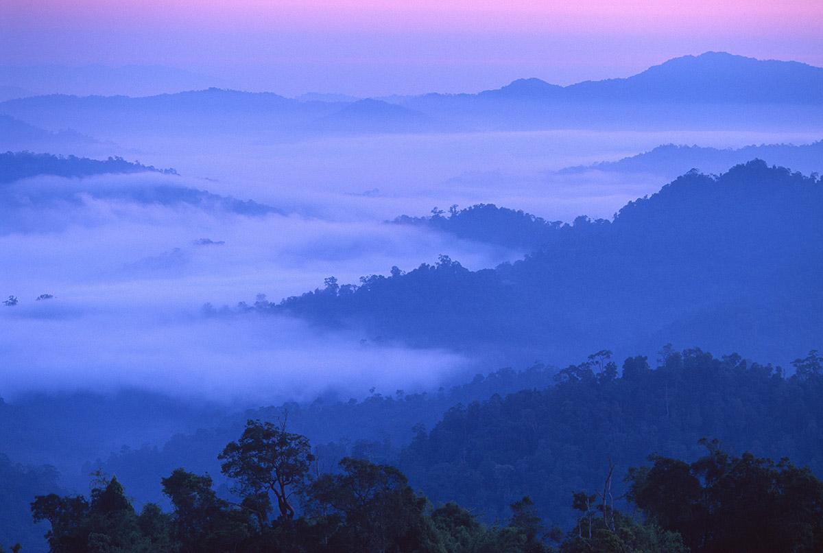 Monsoon rainforest in Malaysia/Thailand. © Edward Parker