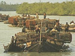 illegal timber rafting in Bangladesh. © Tree News