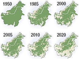 map showing the deforestation of Borneo © www.treehugger.com