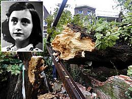 Anne Frank's tree fallen. © Elzinga/AP