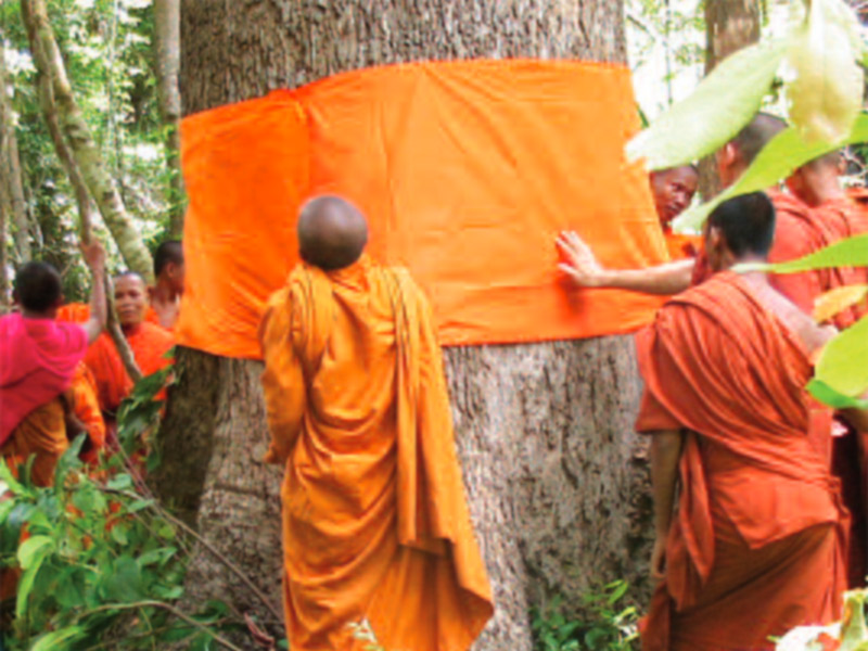 Buddhist monks in northwest Cambodia ordaining a tree. © Equator Initiative