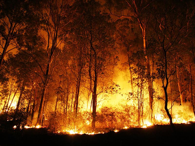 forest fire. @ Peter J. Wilson/shutterstock.com