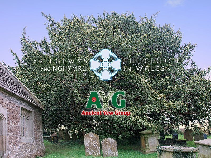 logos of the Church in Wales and the AYG in front of the ancient yew tree at Llansoy. Photo © Peter Norton
